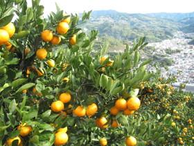 2012.11.11.kurotake (4).jpg