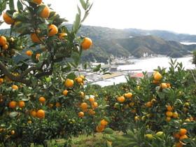 2012.11.11.kurotake (6).jpg