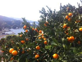 2012.11.14.kurotake (5).jpg