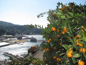 2012.11.16.kanko (5).jpg